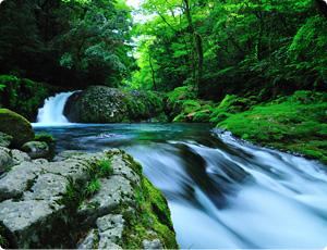菊池水源(菊池渓谷)の水