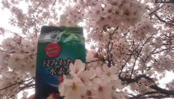 桜と浸みわたる水素水
