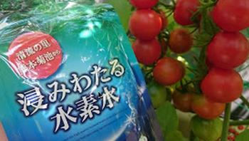 トマトと浸みわたる水素水